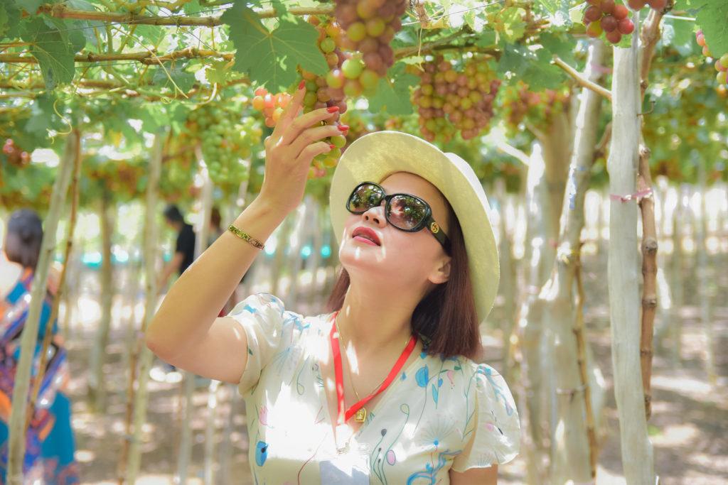 Review đánh thức nàng công chúa Ninh Thuận.